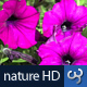 Nature HD | Magenta Flowers - VideoHive Item for Sale