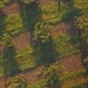 Neat Rows Of Hazelnut Bushes. Low Altitude Aerial View - VideoHive Item for Sale
