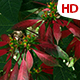 Flower In Nature 0485 - VideoHive Item for Sale