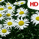 Flower In Nature 0483 - VideoHive Item for Sale