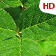 Green Leaf 0495 - VideoHive Item for Sale