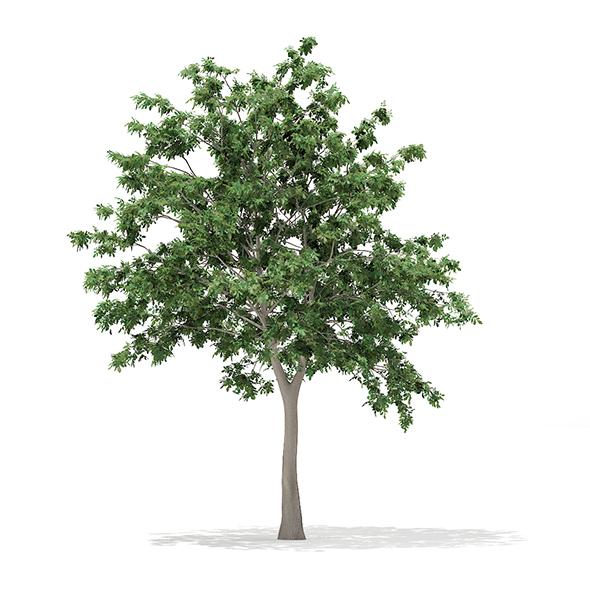 Pedunculate Oak (Quercus Robur) 9.4m - 3DOcean Item for Sale