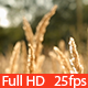 Grass Field  - VideoHive Item for Sale