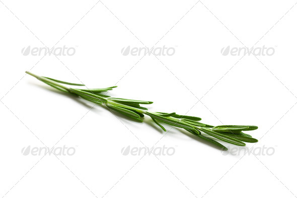 fresh rosemary - Stock Photo - Images