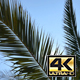 Palm Branches - VideoHive Item for Sale