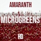Microgreens Amaranth 2 - VideoHive Item for Sale