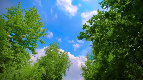 VideoHive Trees With Sky 20060745