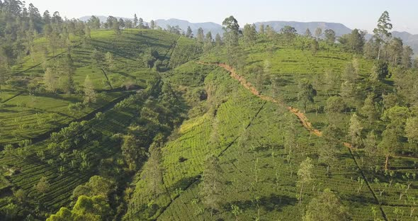 Aerial View of Hills with Tea Plantation on a Bright Sunny Day in Sri Lanka.