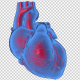 3D Beating Heart - 2 Scene - VideoHive Item for Sale