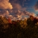 Moving Clouds Above The Trees - VideoHive Item for Sale