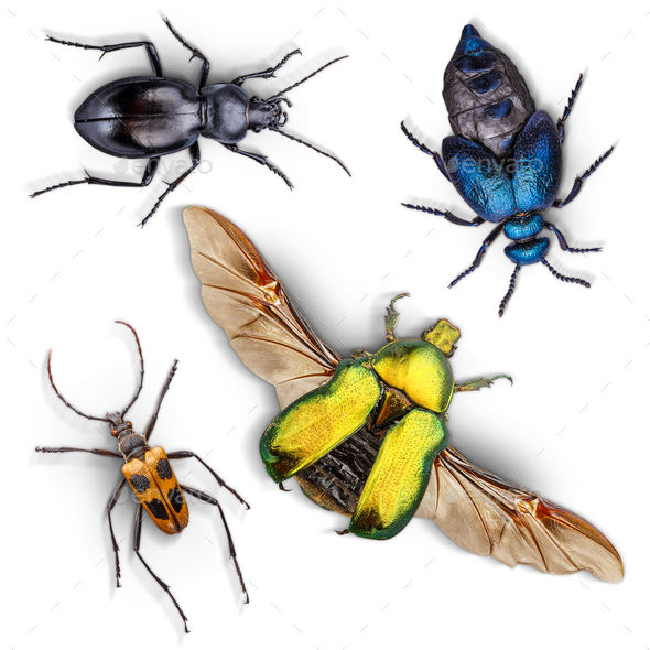 Set of insects - Stock Photo - Images
