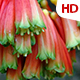 Flower In Nature 0482 - VideoHive Item for Sale