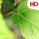 Green Leaf 0503 - VideoHive Item for Sale