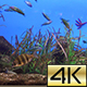 Marine aquarium 01 - VideoHive Item for Sale