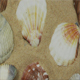 Sea Creatures and Shellfish 9 - VideoHive Item for Sale