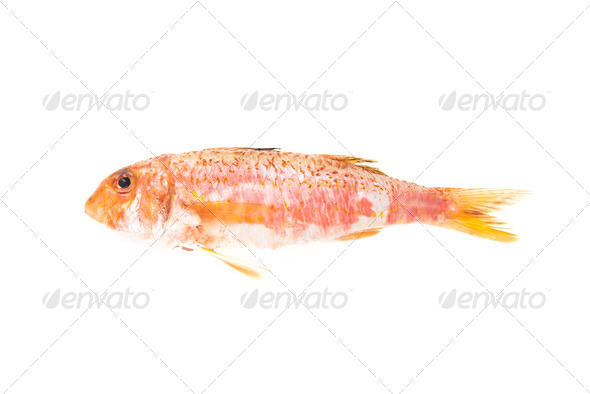 Red Mullet mediterranean fish. Raw food - Stock Photo - Images