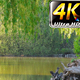 Lake in the Park 2 - VideoHive Item for Sale