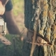 Man Sawing a Dry Tree With Chainsaw - VideoHive Item for Sale