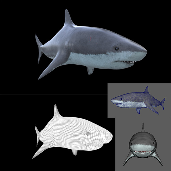 SHARK 3D Model Element Maya Obj arnold - 3DOcean Item for Sale