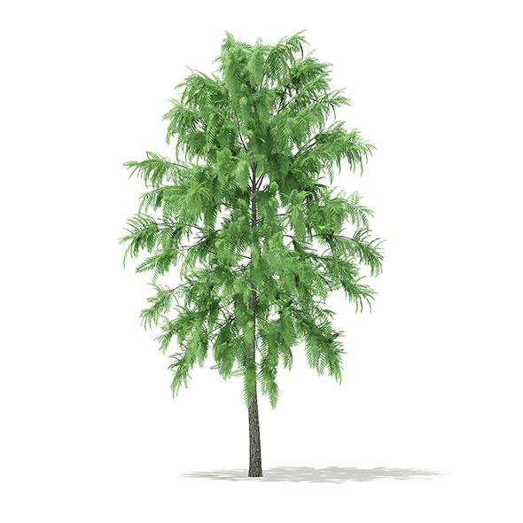 White Willow (Salix alba) 6.6m - 3DOcean Item for Sale