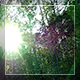 Sun in the Wood - VideoHive Item for Sale