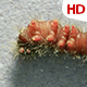 Living Caterpillar 0584 - VideoHive Item for Sale
