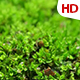 Green Leaf Meadow 0586 - VideoHive Item for Sale