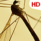 Insect Analysis 0590 - VideoHive Item for Sale