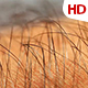 Human Skin With Hair 0634 - VideoHive Item for Sale