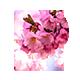 Press | Premium Blogging Tumblr Theme Nulled