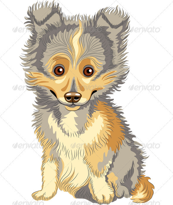 Vector Puppy Shetland Sheepdog, Sheltie, Dog Breed - Animals Characters