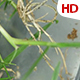 Various Plant Analysis 0702 - VideoHive Item for Sale