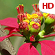 Flower In Nature 0513 - VideoHive Item for Sale