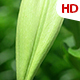 Green Leaf 0512 - VideoHive Item for Sale