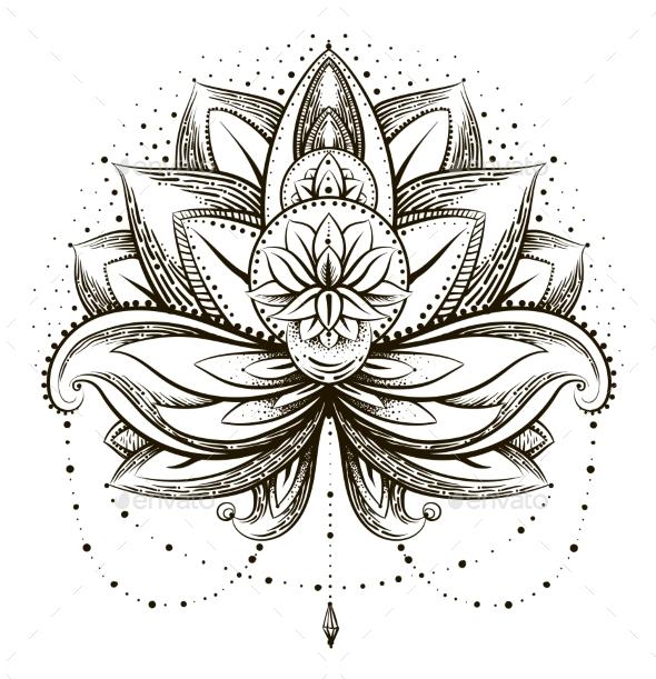 Ornamental Lotus - Flowers & Plants Nature