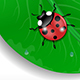 Green Leaf and Ladybird - GraphicRiver Item for Sale