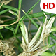 Various Plant Analysis 0703 - VideoHive Item for Sale