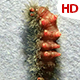 Living Caterpillar 0585 - VideoHive Item for Sale