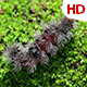 Living Caterpillar 0583 - VideoHive Item for Sale