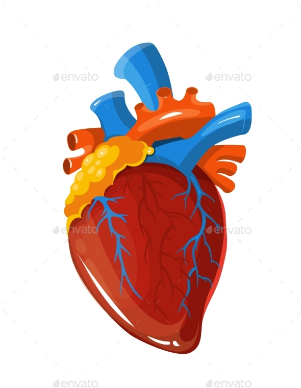 Human Heart Anatomy Vector Medical Illustration by MicrovOne ...