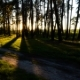 Of Scene In a Forest With Sun Setting And Shining Through The Trees. Summer Landscape  - VideoHive Item for Sale