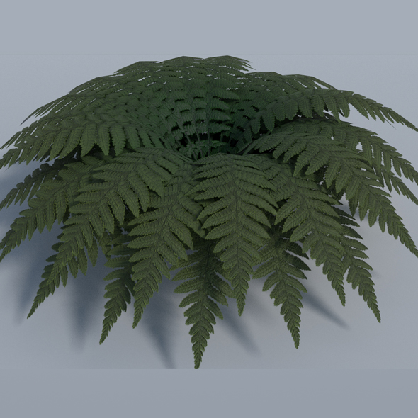 Fern - Low Poly - 3DOcean Item for Sale