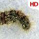 Living Caterpillar 0580 - VideoHive Item for Sale