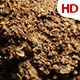 Organic Soil Test 0666 - VideoHive Item for Sale