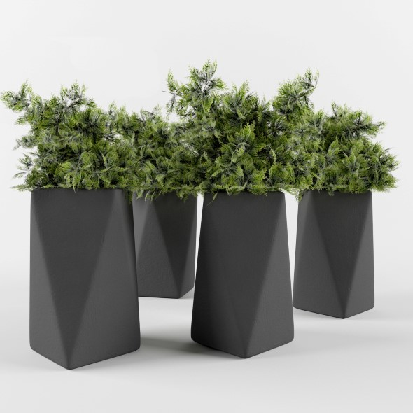 Plant juniper in a pot  - 3DOcean Item for Sale
