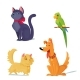 Cats, Dog And Parrot Vector Illustration. - GraphicRiver Item for Sale
