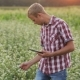 Young Farmer At Sunset With The Tablet. - VideoHive Item for Sale