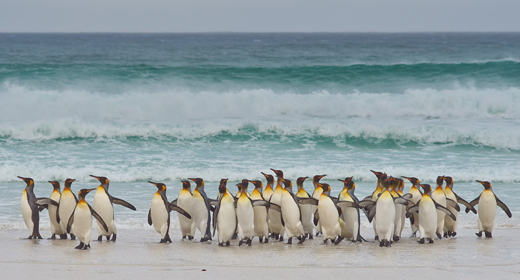 Wildlife of the Falkland Islands