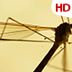 Insect Analysis 0591 - VideoHive Item for Sale