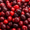 Sweet cherry.  cherry background